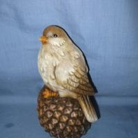 bird sitting on pinecone