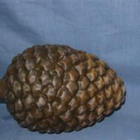 pinecone deco